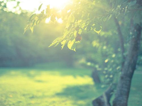 日差しを受ける樹木